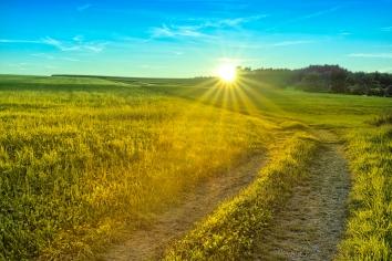 Path leading through Meadows on smooth Hills (Adobe RGB)
